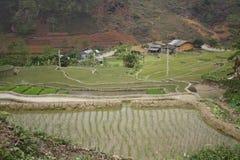 Πεζούλια ορυζώνα ρυζιού στο βόρειο Βιετνάμ Στοκ εικόνες με δικαίωμα ελεύθερης χρήσης