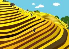 Πεζούλια ρυζιού - Βιετνάμ Στοκ φωτογραφία με δικαίωμα ελεύθερης χρήσης