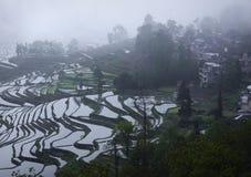 Πεζούλια ρυζιού σε Yuanyang Κίνα Στοκ Εικόνες
