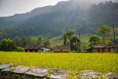Πεζούλια ρυζιού στην περιοχή συντήρησης Annapurna, Νεπάλ Στοκ εικόνες με δικαίωμα ελεύθερης χρήσης