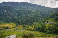Πεζούλια ρυζιού στην περιοχή συντήρησης Annapurna, Νεπάλ Στοκ Εικόνα