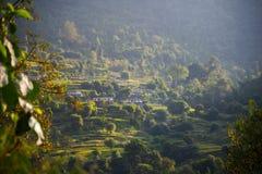 Πεζούλια ρυζιού στην περιοχή συντήρησης Annapurna, Νεπάλ Στοκ Εικόνες