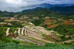 Πεζούλια ρυζιού στο Βιετνάμ Στοκ φωτογραφίες με δικαίωμα ελεύθερης χρήσης