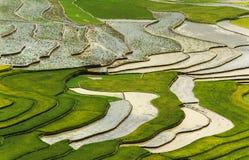 Πεζούλια ρυζιού στο Βιετνάμ Στοκ φωτογραφία με δικαίωμα ελεύθερης χρήσης