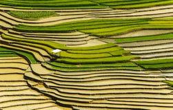 Πεζούλια ρυζιού στο Βιετνάμ Στοκ Εικόνες