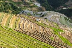Πεζούλια ρυζιού στο Βιετνάμ Στοκ Εικόνα