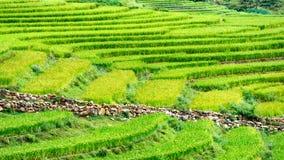 Πεζούλια ρυζιού του Βιετνάμ Στοκ Εικόνες