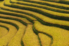 Πεζούλια ρυζιού Στοκ φωτογραφία με δικαίωμα ελεύθερης χρήσης