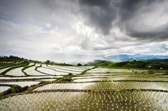 Πεζούλια ρυζιού Στοκ Εικόνα