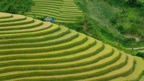 Πεζούλια ρυζιού Στοκ Φωτογραφίες