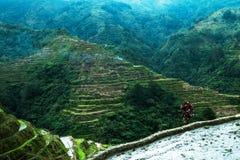 Πεζούλια ρυζιού Banaue, Φιλιππίνες Στοκ φωτογραφίες με δικαίωμα ελεύθερης χρήσης