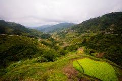 Πεζούλια ρυζιού Banaue, Φιλιππίνες Στοκ Εικόνα