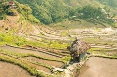 Πεζούλια ρυζιού Banaue - χωριό Batad Στοκ Φωτογραφία