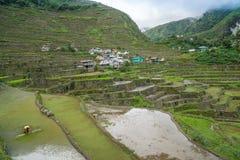 Πεζούλια ρυζιού Banaue Στοκ Φωτογραφία