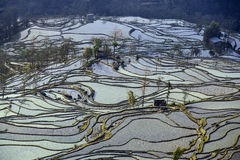 Πεζούλια ρυζιού Hani Στοκ Εικόνα