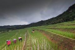 Πεζούλια ρυζιού mai Chiang, Ταϊλάνδη Στοκ Εικόνες