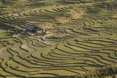 Πεζούλια ρυζιού Sapa στο βόρειο Βιετνάμ Στοκ φωτογραφία με δικαίωμα ελεύθερης χρήσης
