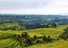 Πεζούλια ρυζιού Tegalalang Στοκ Εικόνες