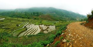 Πεζούλια τομέων ρυζιού, κοιλάδα Sa PA, Βιετνάμ Στοκ εικόνα με δικαίωμα ελεύθερης χρήσης