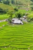 Πεζούλια τομέων ρυζιού Στοκ Εικόνες