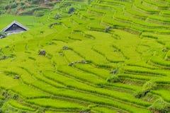 Πεζούλια τομέων ρυζιού Στοκ Εικόνα