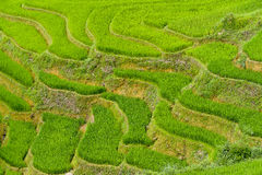 Πεζούλια τομέων ρυζιού Στοκ φωτογραφία με δικαίωμα ελεύθερης χρήσης