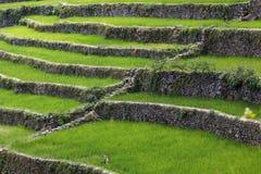 Πεζούλια τομέων ρυζιού Batad, επαρχία Ifugao, Banaue, Φιλιππίνες Στοκ φωτογραφίες με δικαίωμα ελεύθερης χρήσης