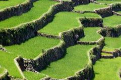 Πεζούλια τομέων ρυζιού Batad, επαρχία Ifugao, Banaue, Φιλιππίνες στοκ εικόνες