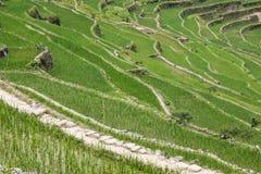 Πεζούλια τομέων ρυζιού Batad στην επαρχία Ifugao, Banaue, Φιλιππίνες Στοκ φωτογραφίες με δικαίωμα ελεύθερης χρήσης