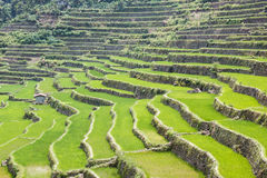 Πεζούλια τομέων ρυζιού Batad στην επαρχία Ifugao, Banaue, Φιλιππίνες Στοκ εικόνα με δικαίωμα ελεύθερης χρήσης