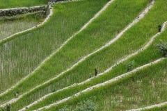 Πεζούλια τομέων ρυζιού Batad στην επαρχία Ifugao, Banaue, Φιλιππίνες Στοκ εικόνες με δικαίωμα ελεύθερης χρήσης
