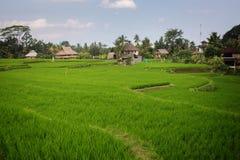 Πεζούλι ρυζιού σε Ubud Στοκ φωτογραφία με δικαίωμα ελεύθερης χρήσης