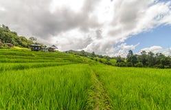 Πεζούλι ρυζιού στην απαγόρευση PaPongPieng Στοκ Φωτογραφίες