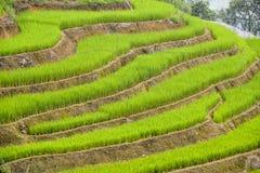 Πεζούλι τομέων ρυζιού Στοκ Εικόνα