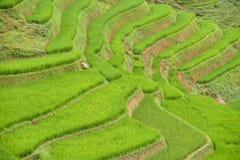 Πεζούλι τομέων ρυζιού Στοκ Φωτογραφίες