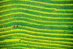 Πεζούλι Longji κομητειών Longsheng Στοκ Εικόνες