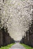 Πεζοδρόμιο κάτω από το άνθος Στοκ φωτογραφία με δικαίωμα ελεύθερης χρήσης