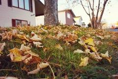 Πεζοδρόμιο με τα φύλλα Στοκ Φωτογραφία