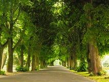 Πεζοδρόμιο περπατήματος πεζοδρομίων στο πάρκο το μήλο καλύπτει το δέντρο ήλιων φύσης λιβαδιών τοπίων λουλουδιών Στοκ Φωτογραφίες