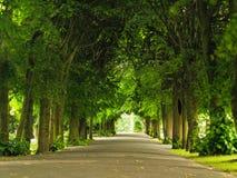 Πεζοδρόμιο περπατήματος πεζοδρομίων στο πάρκο το μήλο καλύπτει το δέντρο ήλιων φύσης λιβαδιών τοπίων λουλουδιών Στοκ εικόνα με δικαίωμα ελεύθερης χρήσης