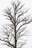 Πεθαμένος ξύλινος στους τομείς Στοκ φωτογραφίες με δικαίωμα ελεύθερης χρήσης