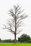 Πεθαμένος ξύλινος στους τομείς Στοκ εικόνες με δικαίωμα ελεύθερης χρήσης
