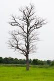 Πεθαμένος ξύλινος στους τομείς Στοκ εικόνα με δικαίωμα ελεύθερης χρήσης