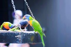 Πεινασμένα πουλιά Στοκ Εικόνες