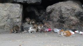 Πεινασμένες και κουρασμένες γάτες αλεών στα απορρίματα απόθεμα βίντεο