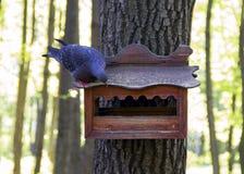 Πεινασμένη συνεδρίαση περιστεριών στη στέγη του πουλιού στοκ φωτογραφίες με δικαίωμα ελεύθερης χρήσης