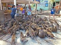Πεινασμένοι πίθηκοι Στοκ Φωτογραφίες