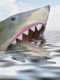 πεινασμένος καρχαρίας Στοκ Εικόνα