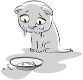 πεινασμένο γατάκι Στοκ εικόνες με δικαίωμα ελεύθερης χρήσης