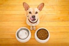 Πεινασμένο κύπελλο σκυλιών Στοκ εικόνες με δικαίωμα ελεύθερης χρήσης